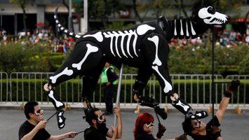 Una funeraria en México sugiere que el 3 de noviembre se convierta en el Día de Muertos para Mascotas.