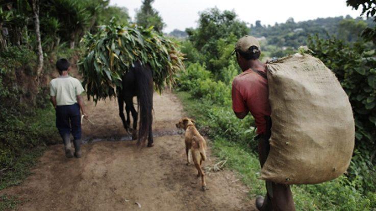 Unos 59 millones de ciudadanos del ámbito rural viven en situación de pobreza en América Latina y el Caribe.
