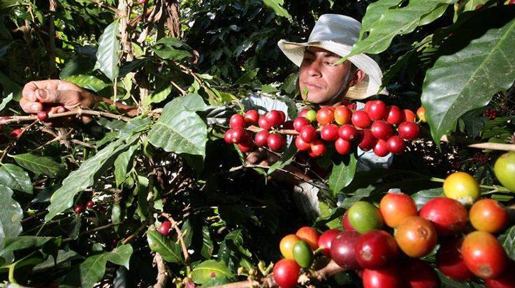 Nespresso invertirá 50 millones de dólares en el cultivo de café en las antiguas zonas de conflicto en Colombia.