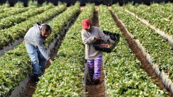 México firma acuerdo con la FAO para apoyar el desarrollo del sistema alimentario rural en el Caribe.