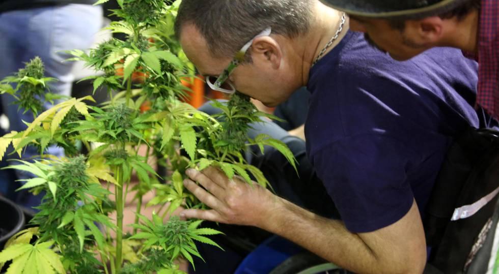 Una empresa canadiense será la encargada de iniciar la importación de productos con cannabis al país azteca.