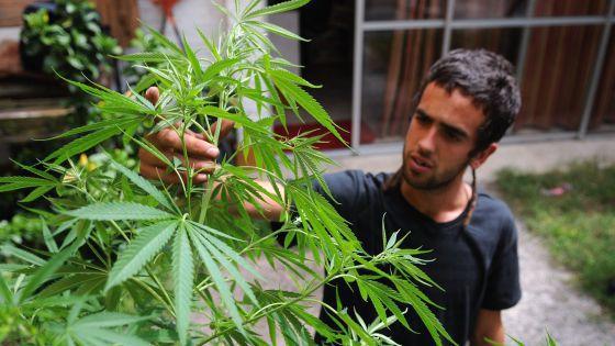 Persona con planta cannabis