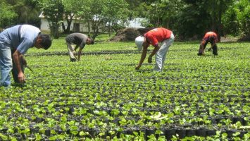 La renta agraria