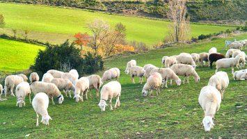 La Interovic asegura que las pérdidas de los ganaderos alcanzan los 200 millones