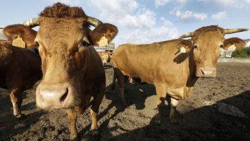 Agricultores y ganaderos afectados por daños climáticos tendrán rebaja del IRPF