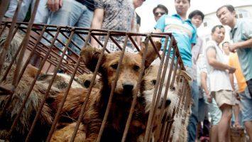 China gatos y perros