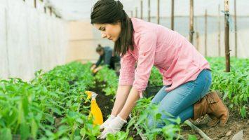 Innovación para Mujeres Rurales