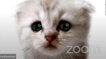 filtro del gato en Zoom